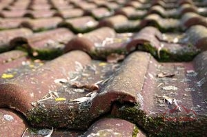 Dirty Roofing