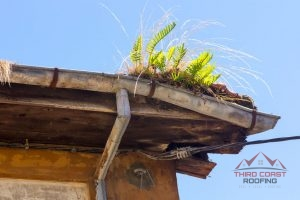 Gutters with weeds definitely need professional repairs.