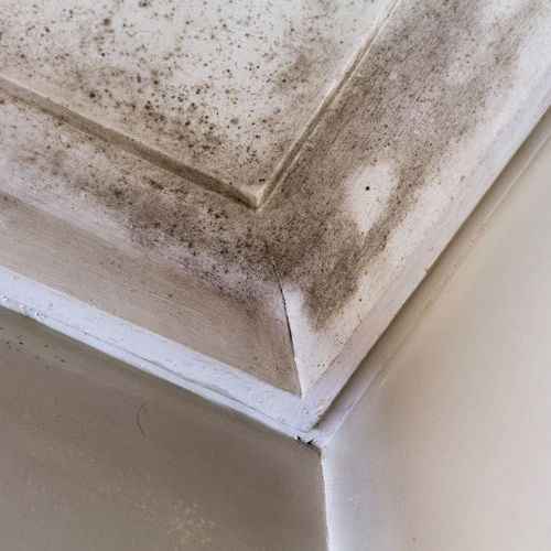 Mold Has Developed On A Ceiling Due to a Leaking Roof